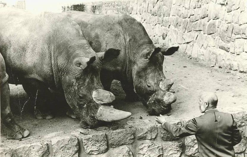 Josef Vágner a nosorožci tuponosí. Foto - archiv J. Vágnera